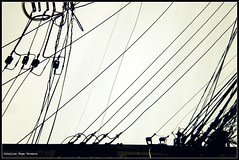 """LLuVia"" uRBaNa (CatuRRiNa d-.-b) Tags: city santiago white abstract black art blanco lines project photo nikon foto power arte negro ciudad bn minimal explore cables 365 abstracto proyecto lneas 2011"