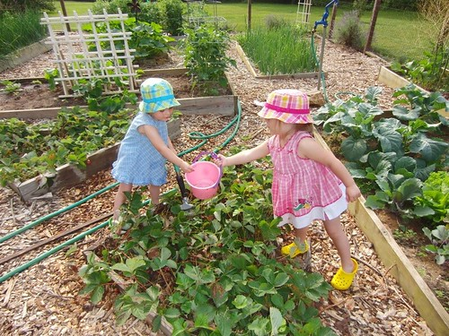 sisters picking strawberries