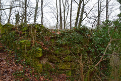 Burgruine Drachenfels (reipa59) Tags: pfälzerwald rheinlandpfalz efeu moos castle castledrachenfels burgruine burgdrachenfels vegetation verfall mauerreste