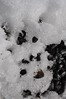 Rocky Melt (SarahBK Photography) Tags: ice snow winter canada photograph sarahbkphotography melt water abstract nikon d5000 neighbourhood victoriabc yyj nature outdoors outside february