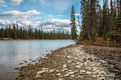 Athabasca River Bank (Kirk Lougheed) Tags: alberta athabascariver canada canadian canadianrockies canadien icefieldparkway jasper jaspernationalpark mounthardisty mountkerkeslin autumn fall forest landscape mountain nationalpark outdoor river water