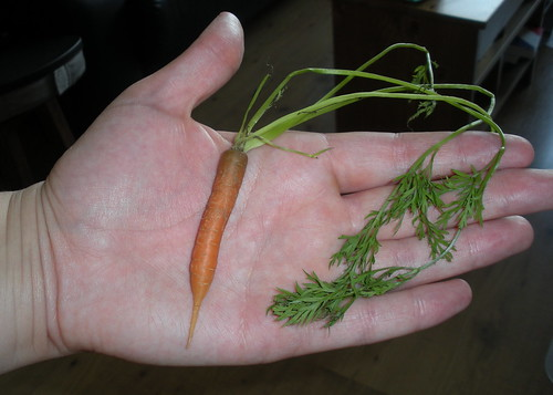 Teeny Carrot