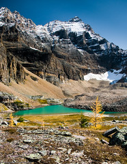 Opabin Lake, Yoho Park (Marc Shandro) Tags: autumn lake snow canada mountains fall nature vertical rockies bright britishcolumbia bluesky alpine northamerica rockymountains wilderness larch tarn yoho freshwater lakeohara environments mywinners skyandatmosphere