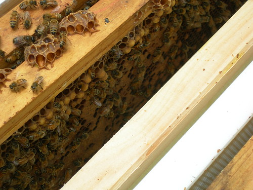 Burr comb is any comb your bees make in bee space or the outer edges of the frames.
