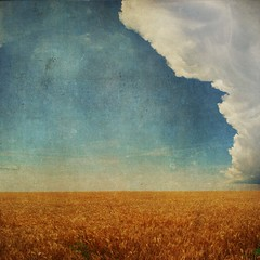 textured storm (moosebite) Tags: blue sky cloud texture nature clouds landscape golden nikon colorado colorful view artistic background wheat grunge bluesky explore textures filter backgrounds layers filters stormcloud d80 moosebite jrgoodwin