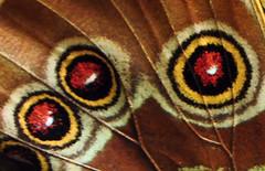 A Natural Mosaic (by drurydrama (Len Radin))