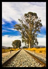 (Antonio Carrillo (Ancalop)) Tags: españa tree train canon tren arbol spain murcia puertolumbreras ancalop