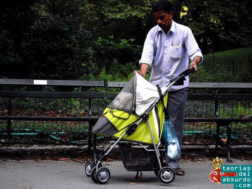 Hombre pakistaní paseando a un perro dentro de un carrito de bebé en central park