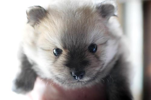 09/20/09 puppy