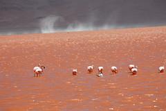 baudchon-baluchon-laguna-colorada-0445
