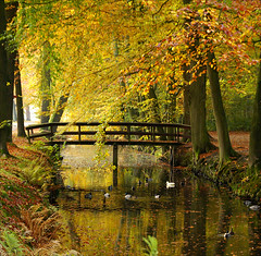 silence is golden...... (atsjebosma) Tags: bridge autumn trees water leaves reflections bomen colours ngc nederland thenetherlands ducks npc brug groningen leek eenden landgoednienoord reflecties supershot silenceisgolden mywinners abigfave theunforgettablepictures atsjebosma mirrorser superstarthebest