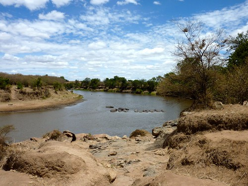 Hippos, Maasai Mara, Kenya