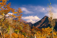 Hunza In Autumn (Amir Mukhtar Mughal | www.amirmukhtar.com) Tags: blue autumn trees pakistan red mountain colors leaves yellow clouds canon landscape golden colours scenic amir hunza mughal mughals amirmukhtar