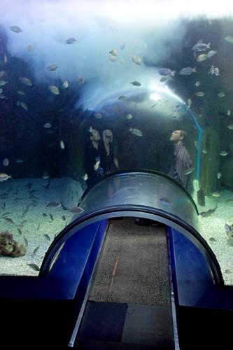 aquarium-Valencia