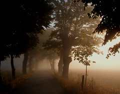 sun breaking thru (Per Ola Wiberg ~ Powi) Tags: morning friends mist nature fog october sweden explore avenue 2007 dimma finegold thegalaxy inspiredbylove mostintresting eker creativephoto idream naturepoetry frameit golddragon natureplus platinumphoto peaceaward flickrhearts ekebyhovsallen flickrbronzeaward flickrsilveraward heartawards artistspotlight flickridol qualifiedmembersonly yourarthastouchedtheworld thebestofnature universalelite artofimages tophonorofphotographerparadise angelawards saariysqualitypictures visionaryartsgallery diamantefotosatuestilo davincimemories platinumbestshot platinumpeaceaward universeofnature bestcapturesaoi andromeda50 ~exclusivity~ goldenplanet naturesprime fabulousplanet platinumplanet flickrsgottalent flickrssuperstartalent thebestshotplatinumaward dreamingphotos mygearandme freedomgexcellence mygearandmepremium suprthearts mygearandmebronze mygearandmesilver mygearandmegold eliteplanet mygearandmeplatinum thenaturessoul ringexcellence allthebeautiesofnature level2photographyforrecreationsilver level3photographyforrecreationgold brigettesbeautifulnaturegallery