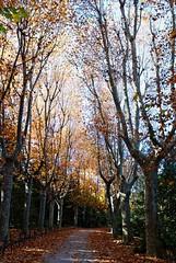 Paseo de otoño (hermenpaca) Tags: madrid autumn trees fall leaves del garden hojas leaf árboles paseo campo otoño alameda palacioreal moro jardín palaciodeoriente campodelmoro treewalk