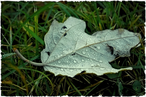 autumn rain drops