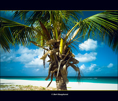 The time to relax is when you don't have time for it. &  Sydney J. Harris. (bert.raaphorst) Tags: ocean sea sun tree beach relax island holidays  palm palmtree tropical allrightsreserved bigfive eaglebeach timetorelax bej dutchcaribbean bertraaphorst aruba2009 bertraaphorst bertr