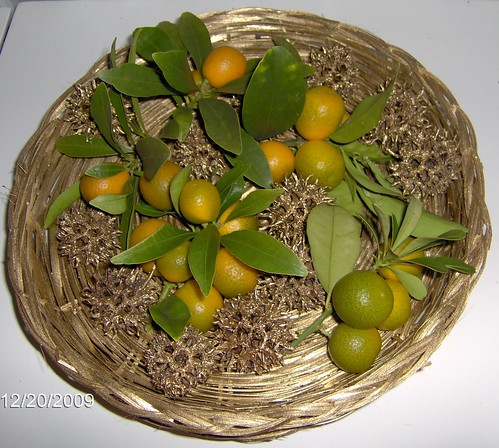 Kumquats & Gold Sweet Gum Balls - Winter Solstice Offering