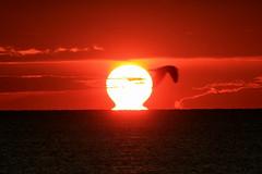 Bruciaaaaaaaa! / It Burnssssssssss! (Pisa, Tuscany, Italy) (AndreaPucci) Tags: italia toscana pisa mare sole gabbiano tramonto andreapucci canoneos400 italy tuscany sea marinadipisa sun seagull sunset canonefs55250f456is