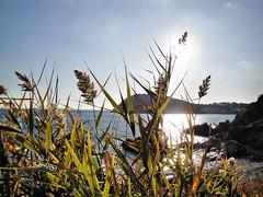 Trough the seaside grass .. (Michal Sibilla) Tags: espaa sun seascape beautiful grass sunshine marina landscape seaside spain girona hdr platja palams palamos calaestreta