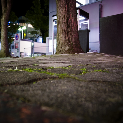 Tree in front of the Koban (Police Box)