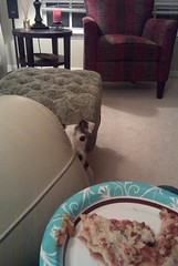 Wantz pizza mama (Sweet Chi) Tags: dog terrier jackrussell
