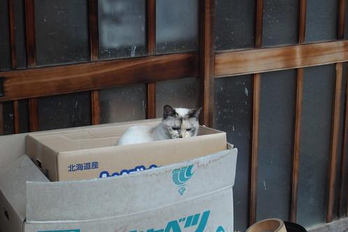 Today's Cat@2010-02-11
