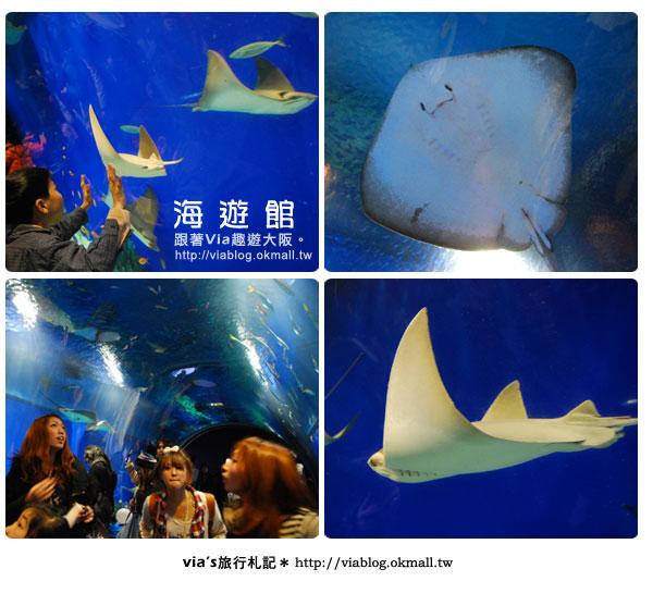 【via關西冬遊記】世界最大極的水族館~大阪海遊館6