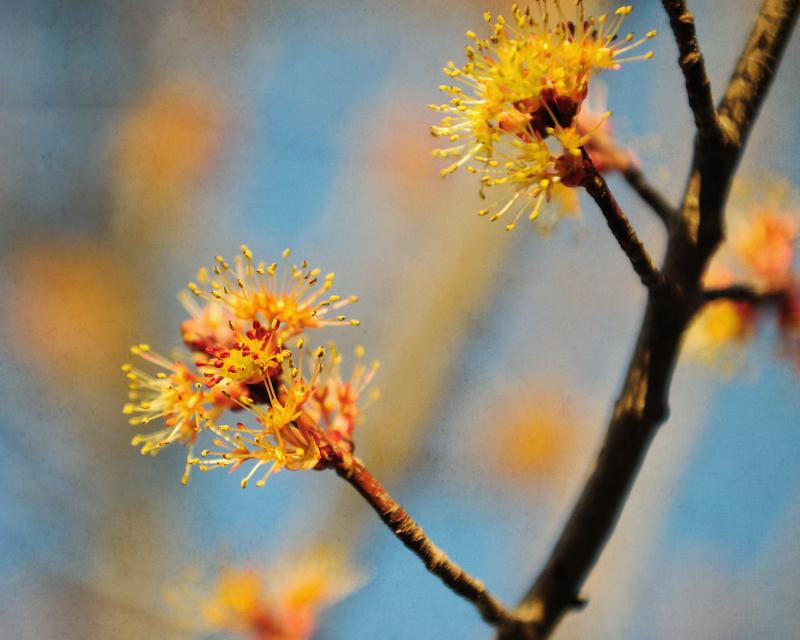 Tree Pincushions