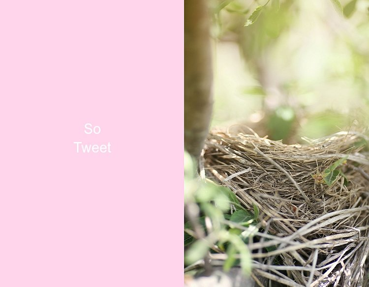05-12-nest2