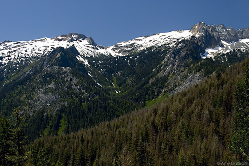 Spider Meadow 023