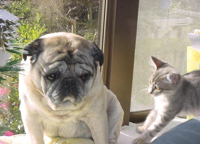 cats&dogs_28