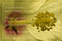 A Tribute for President Corazon Aquino (B2Y4N) Tags: macro yellow death democracy filipino tribute cory hiddengarden aquino gumamela bryanrapadas corazoncaquino