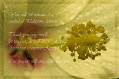 A Tribute for President Corazon Aquino (B2Y4N) Tags: macro yellow death democracy filipino tribute cory hiddengarden aquino gumamela bryanrapadas corazoncaquino