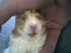 Cutie and Hammy. 2009. 005 (I love Hammy) Tags: hamsters