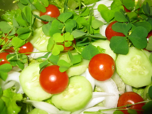 Salad with Wood Sorrel