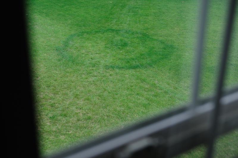 Crop Circles?