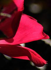 _DSC5311 (pnther60) Tags: backyard roanoke floraandfauna