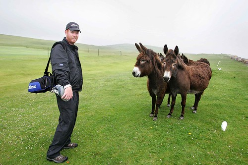 The Donkeys at Mulranny Links