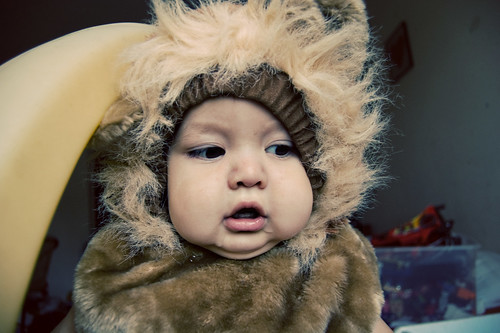 baby lion [6]