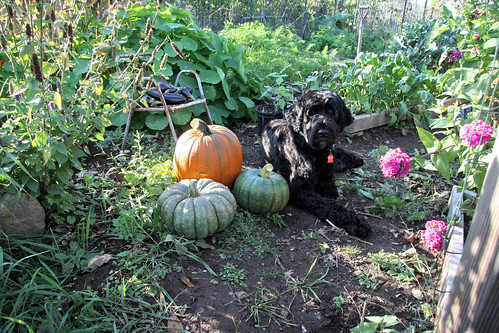 skippy and pumpkins 4