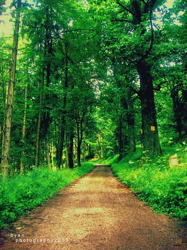 الغابة السوداء في المانيا..!! 4029445574_7d815e423