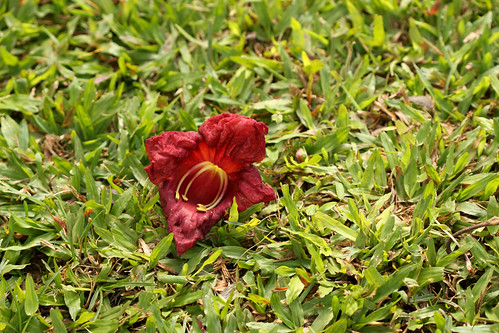 Red Flower and Green Grass