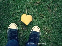 (amandamarqs) Tags: coração folha allstar