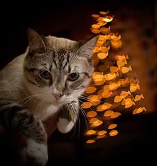 kočka vánoce u stromečku