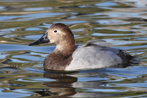 26_canvasBack_female