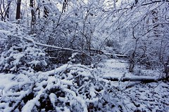 First Snowfall (GWD Photography) Tags: trees winter white snow cold nature night forest canon outdoors photography rebel xt frozen woods long exposure december angle path wide sigma gordon snowfall precipitation gwd sigma1020
