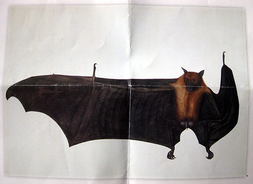 anatomically correct bat