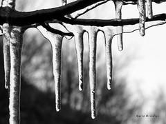 Ice - Ghiaccio (Marioleona) Tags: park bw italy parco ice wind gaeta vento lazio gmt ghiaccio appennini aurunci mariobrindisi cainapoli